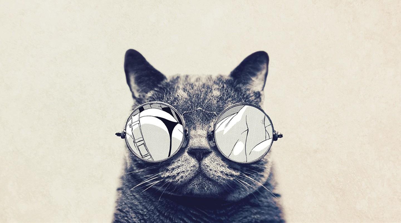 Tu gato puede ser fotógrafo y compartir en las redes