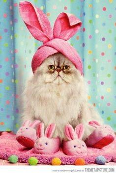 easter cat 2 - La Semana Santa y los huevos de Pascua, una tradición muy dulce