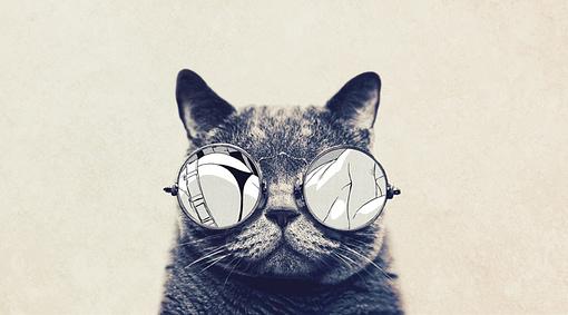 Lee más sobre el artículo Tu gato puede ser fotógrafo y compartir en las redes