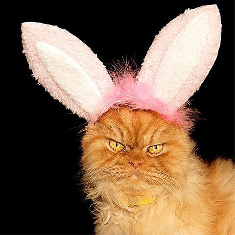 angry cat bunny 570x480 - La Semana Santa y los huevos de Pascua, una tradición muy dulce
